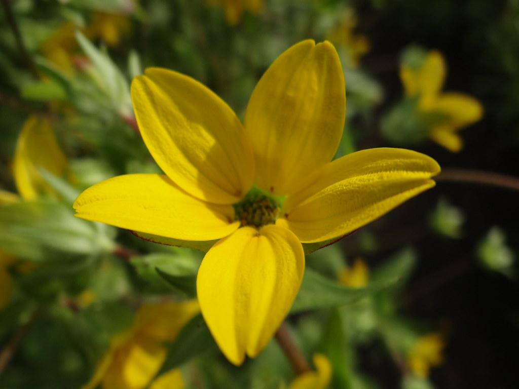 Mit Freuden und Leiden der Liebe, bis der purpurne Morgen kam, doch nicht mit all meinen Freuden und nicht mit all meinem Gram im Botanischen Garten 01327