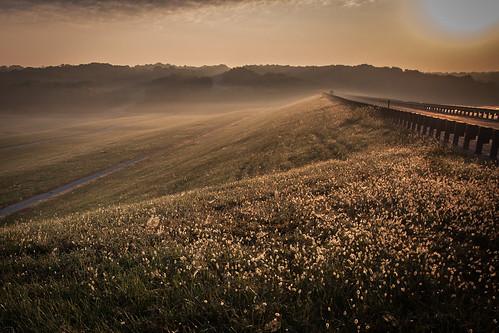 sun mist lake grass fog sunrise dawn dam mo seedhead missouri guardrail turkeyvulture leessummit flemingpark bluespringslake