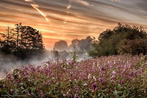 pink trees england sky orange mist sunrise dawn unitedkingdom sony wildflowers riverthames oxfordshire a77 southoxfordshire littlewittenham sonyalpha andyhough slta77 andyhoughphotography