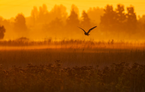 Early Morning Suprise | by Davor Desancic