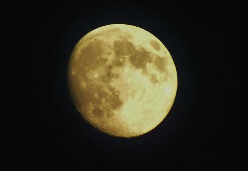 Gold Coin Moon