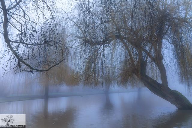 Soft Fog