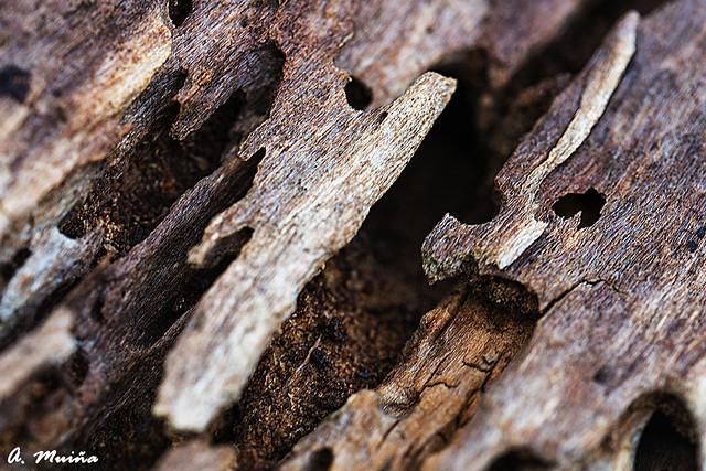 Abstract. Old wood. Abstracto. Madera podrida.