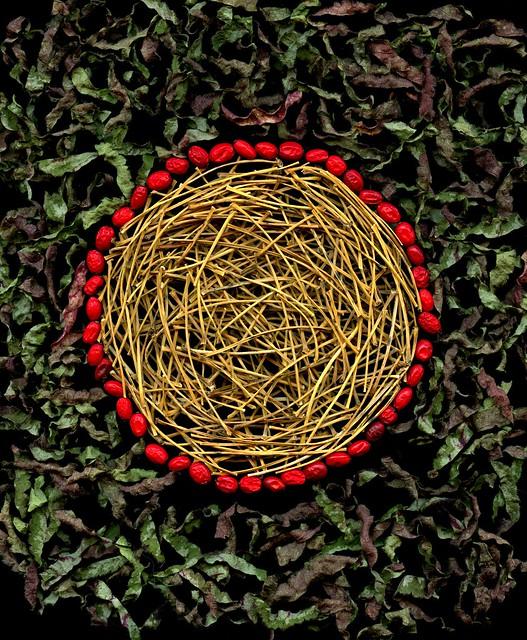 58045.01 Ginkgo biloba, Berberis thunbergii, Lamium galeobdolon