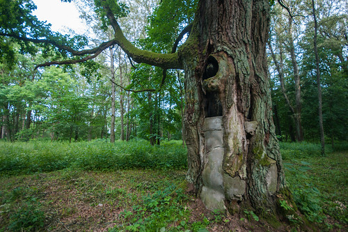 park tree concrete trunk belarus stankovo