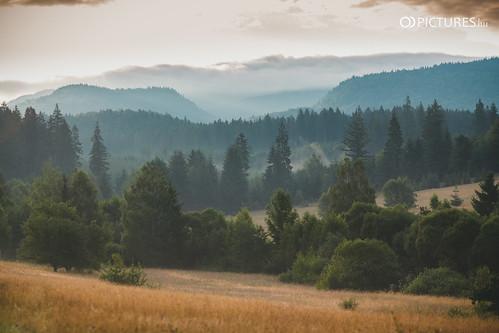 wood sun tree green nature field pine forest sunrise canon landscape eos dawn sundown meadow romania orient magyar sunbeam hungarian 6d erdely izvoare hargita ivó harghitacounty odpictures odpictureshu