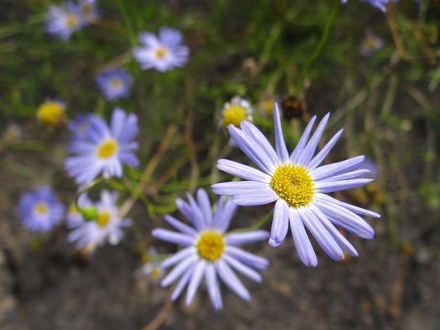 Botanischer Garten im Frühling der Hoffnung beschwingte Gedanken, Liebe Hoffnung Blumenduft, in klarster Nacht hinauf zur Liebe und sprich, wie sie sich oben umgestaltet, so auf der Erde schwindet, wächst mein Glück, und wispere sanftbescheiden ihr an das Ohr, wie Zweifel oft das Haupt hing, Treue thränte, und ihr Gedanken, mißzutraun geneigt, beschilt euch die Geliebte dessenthalb, so sagt ihr wechselt zwar, doch ändert nicht, wie sie dieselbe bleibt und immer wechselt 01295