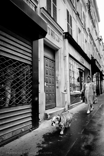 Bulldog roaming the city - Fuji X-Pro 1 | by HamburgCam