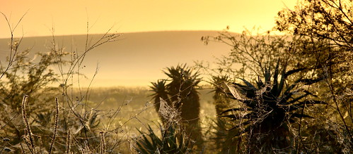 park sunrise national cobwebs westerncape bontebok