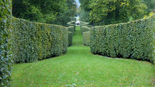 Hedges | by oatsy40