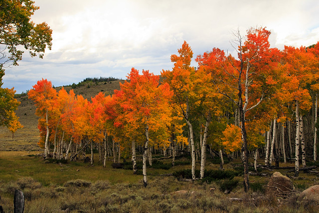 Autumn at Fish Lake, 20 September 2014 (2)