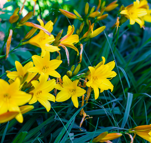 Flowers | by EverydayUrbanGardener