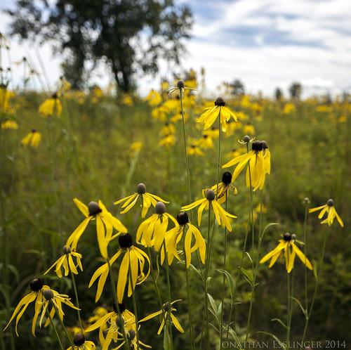 Flower Patch | by jonesslinger