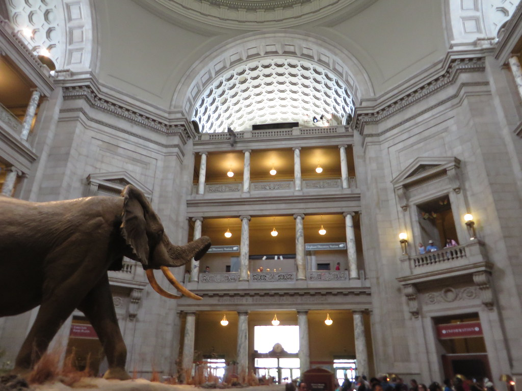 Rotunda, National Museum of Natural History, Washington, D.C.