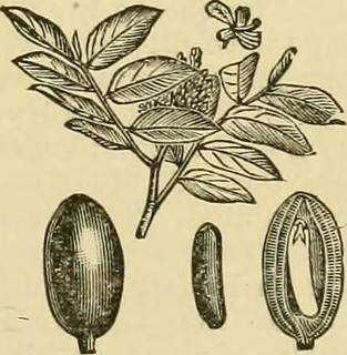 "Image from page 376 of ""Smiley's cook book and universal household guide; a comprehensive collection of recipes and useful information, pertaining to every department of housekeeping .."" (1895) 