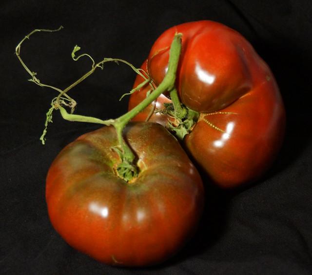 Tomatoes-9-12-2014