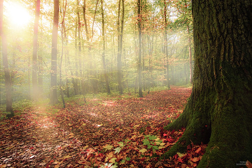 autumn trees mist tree fall nature colors fog forest germany landscape deutschland october colorful laub herbst natur thuringia landschaft wald hainich
