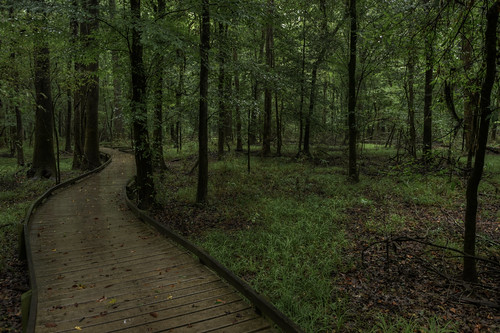 green sc nature forest landscape nationalpark nikon unitedstates outdoor hiking interior southcarolina d750 boardwalk hdr hopkins hikingtrail congaree landscapephotography 1635mm visitsc