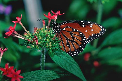 VanDusen Botanical Garden, Vancouver, British Columbia, Canada