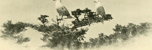 "Image from page 208 of ""Wild wings; adventures of a camera-hunter among the larger wild birds of North America on sea and land"" (1905) 