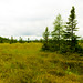 Springstead Muskeg
