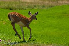 Oh Deer-7027