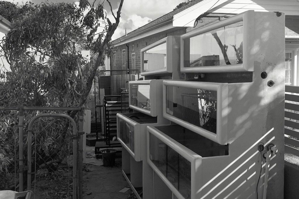Rosebery, NSW http://ift.tt/1zJC2Im