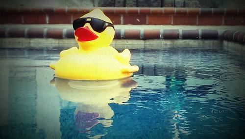 rubber ducky | by NancyFry