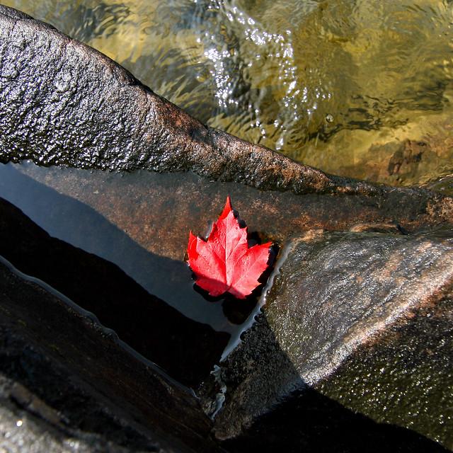 Fall Flotsam
