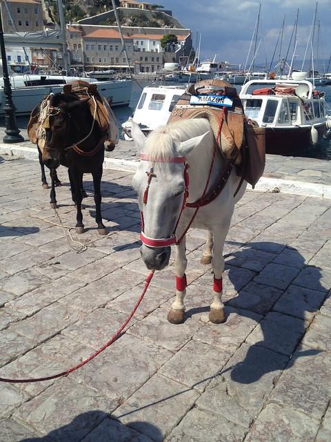 Crosses on donkeys