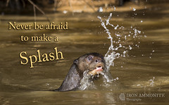 Giant Otter Splashing