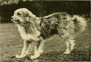 "Image from page 131 of ""The new book of the dog : a comprehensive natural history of British dogs and their foreign relatives, with chapters on law, breeding, kennel management, and veterinary treatment"" (1911) 