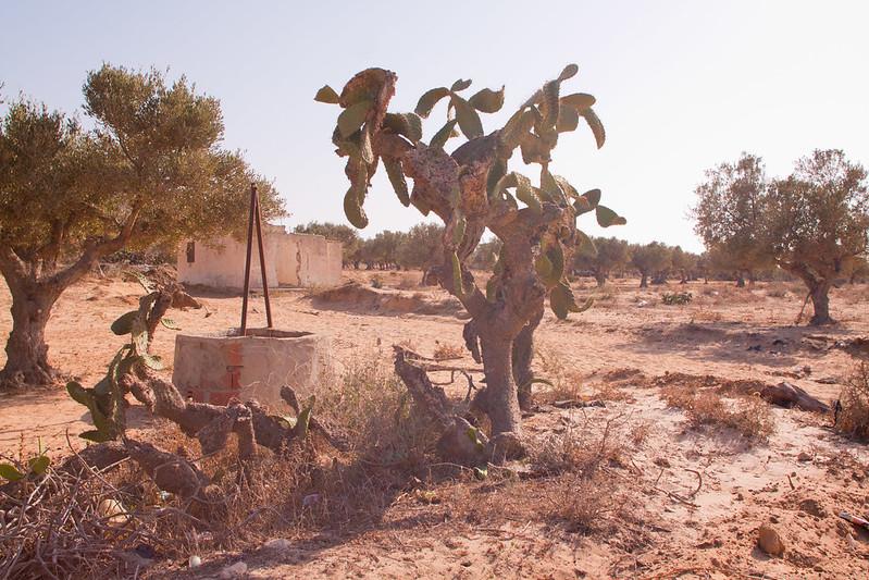 Tunisia-64