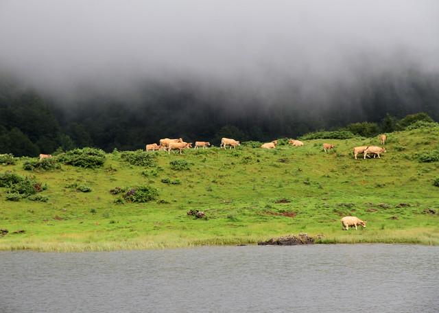 Sur les rives de l'étang de Lers