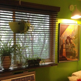 BF @radiobobby and I put up our new wooden blinds from blinds.com Perrty! | by CocteauBoy