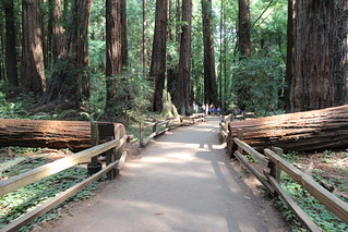 A trip to Muir woods San francisco Aug 2014 | by davebloggs007