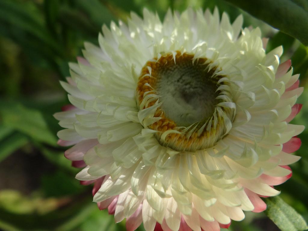 Botanischer-Garten-01324