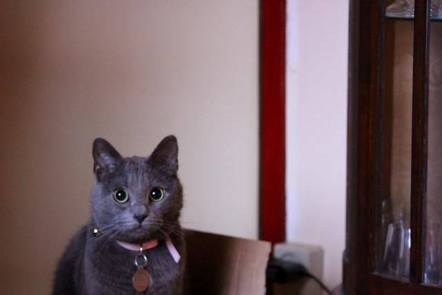 Chupa posing in his favorite box