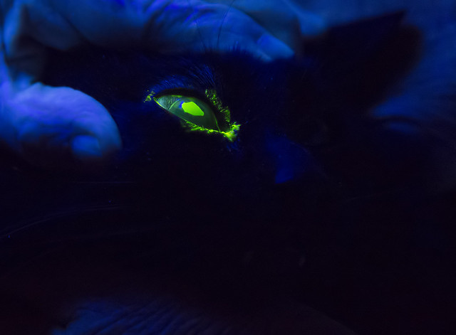 Fluorescein Dye under Blue Light