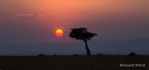 africa sunset tree kenya safari mara afrika kenia masai