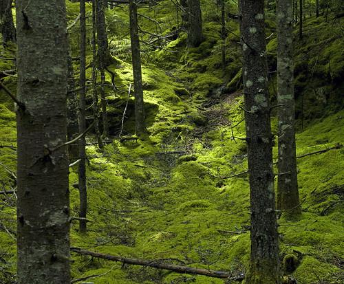 barredislandpreserve natureconservancy maine coast trail nature forest beautiful trees green hasselblad zeiss lens digital back earth conservation