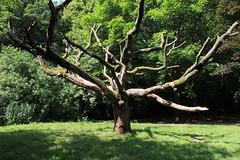 Tree, Worden Park