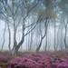 Misty Stanton 3 by J C Mills Photography