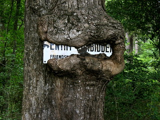 """""""ENTRY FORBIDDEN Friendswood development corp."""" - porcelain sign on a tree near the San Jacinto river prior to developing  Kingwood, Texas, a part of Houston, TX. It is now 14000 wooded acres with over 38000 people."""