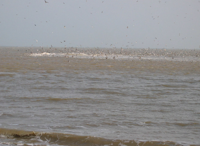 The sea at Dungeness