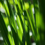 緑の光 (The green light)