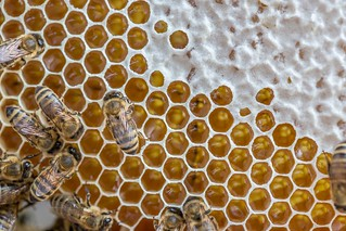 Allagash Bee Hive has a new queen! | by Allagash Brewing