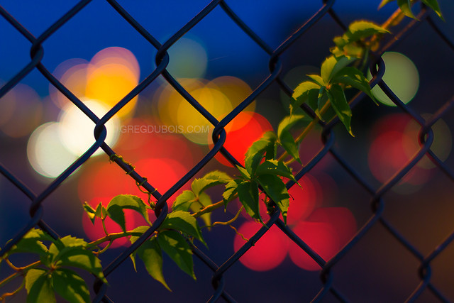Mass Pike Boston and Fenway Bokeh through Chain Link and Ivy at Dawn, Back Bay Boston