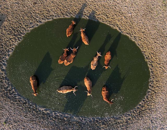 Wijk aan Zee Noordhollands duinreservaat (3)