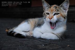 Cat/Einstein   by Riccardo Aris Riva